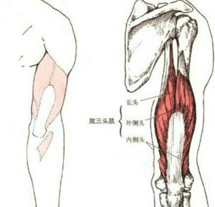 """""""肱三頭肌長頭增肌專項力量訓練:3個動作讓手臂壯實有力有型"""""""