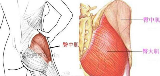 """""""臀中肌專項訓練方案臀部飽滿的關鍵:5個動作讓臀部俊俏豐盈有力"""""""
