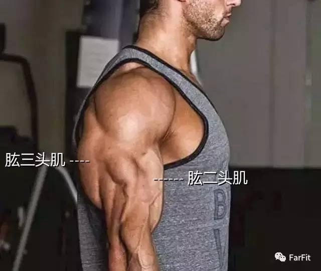 """""""想要練成健碩的麒麟臂,這個部位比肱二頭肌大兩倍!"""""""