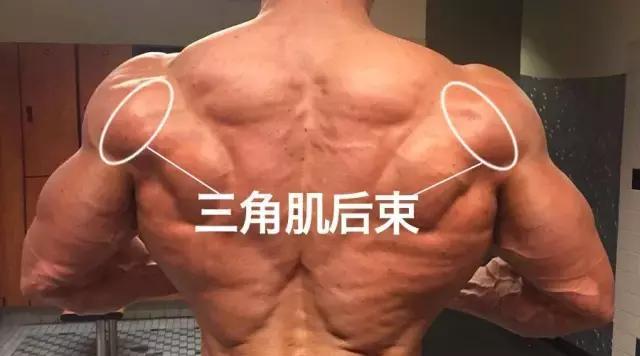好看的肩膀靠鍛煉,如何安排三角肌組合鍛煉?