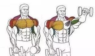 """""""孤立動作——讓肌肉單獨承受負荷,最大刺激肌肉!"""""""