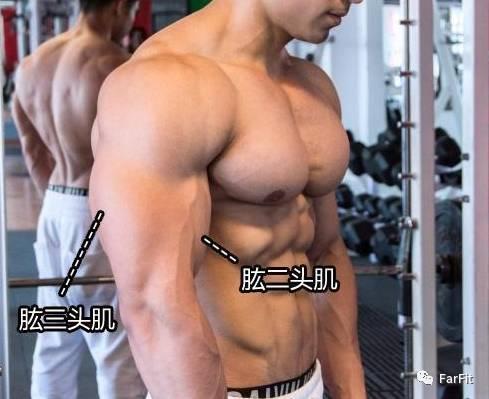 想要練成粗壯的手臂肌肉,你得拿一個訓練日專門練習