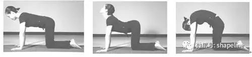 豎脊肌,強韌卻又脆弱,我們該如何保護它?