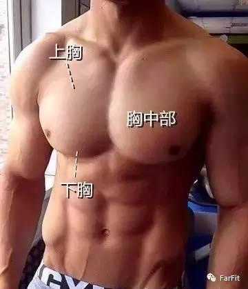 如何不用器械,但全面塑造一個飽滿、厚實、方形的胸肌?