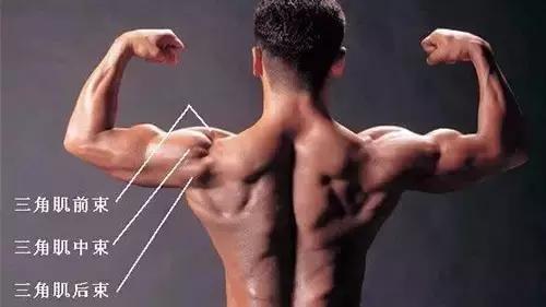 健身几大肌群,最典型的训练动作是什么?