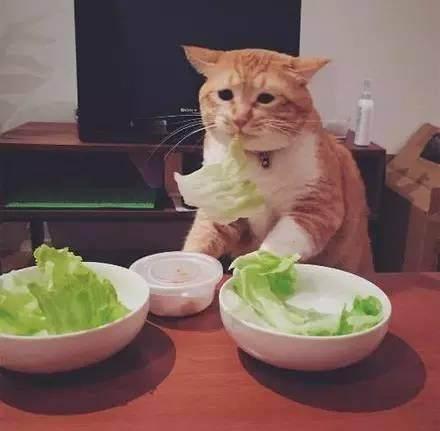 """""""輕斷食""""減肥法靠譜嗎?輕斷食並不能減重!"""