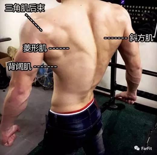 平行動作訓練,讓你的背部更寬,呈現倒三角