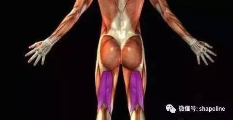 膕繩肌:構建腿部力量與穩定的大功臣!忽略它是你的損失!