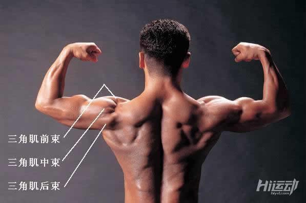 大重量會練廢肩膀! 4個動作強化肩部三角肌