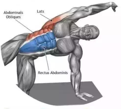 全身肌肉拉伸圖譜(gif圖)值得分享
