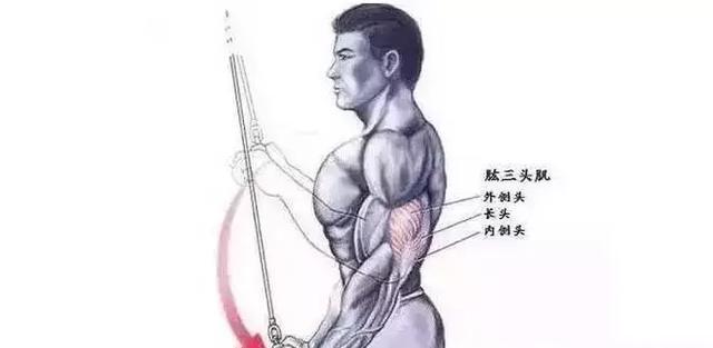 欲練胸肌,先練手臂