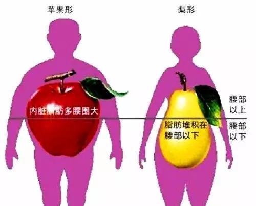 體重標準,看起來卻胖的人,你的體脂率一定超標!