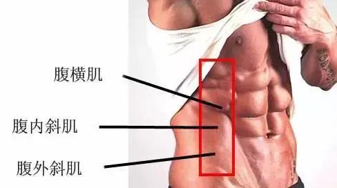 一組公狗腰訓練圖,練出細而有力的男人腰部!