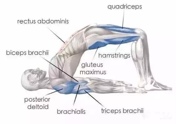 一個動作,不僅拯救臀部下垂,還能練出少女腰