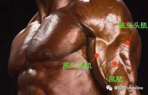 如何打造傲人的肱二頭肌?這三點才是重中之重!
