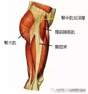 一套徒手臀腿訓練動作,擁有翹臀和大長腿!